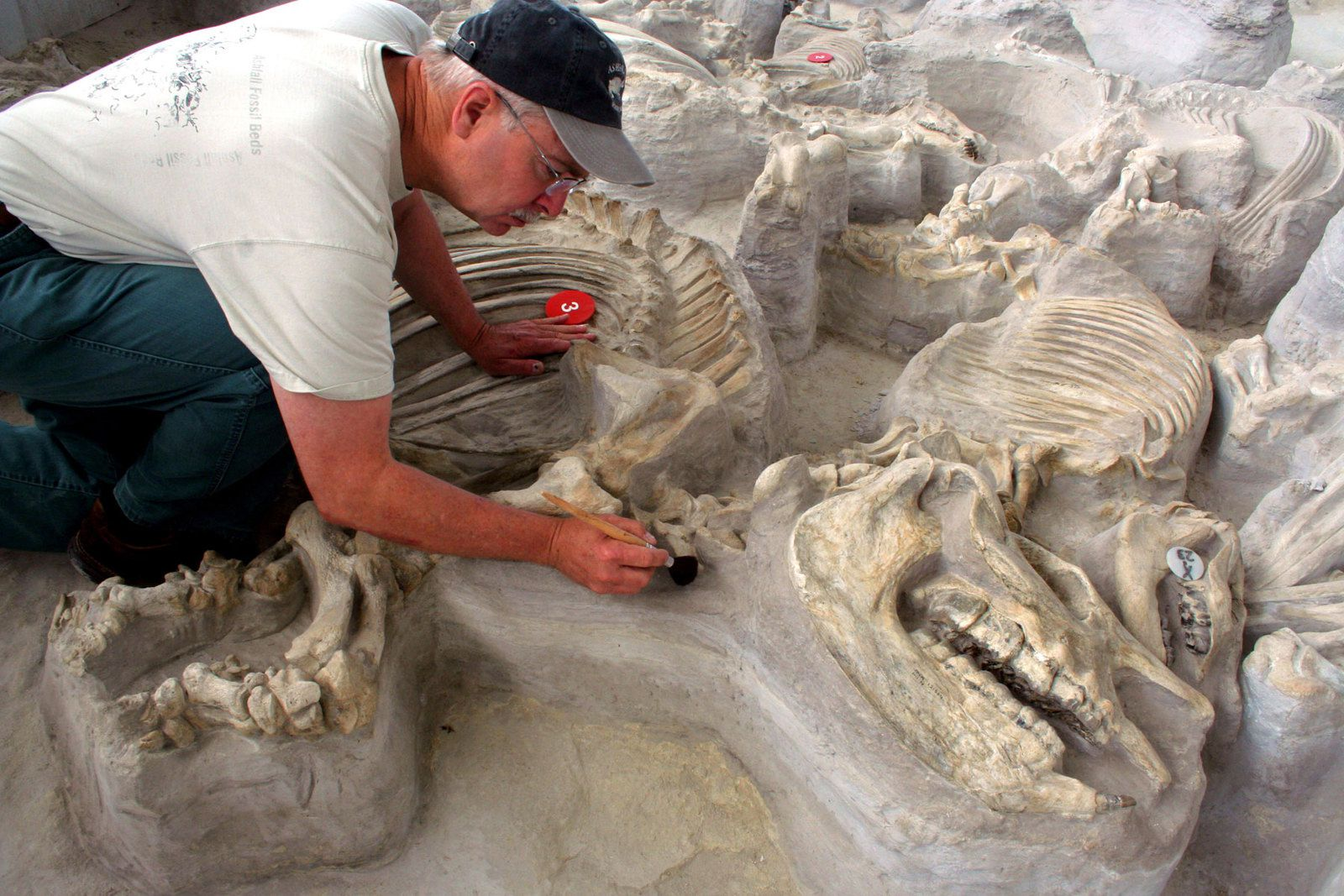 Ashfall Fossil Beds - excavations are ongoing - doc. theodysseyonline