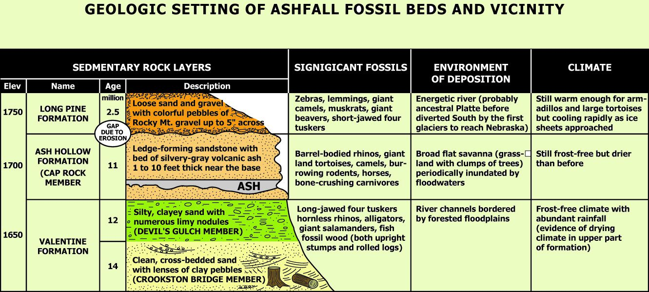 Ashfall Fossil Beds, geological section and list of fossils found in each layer - Doc.http: //ashfall.unl.edu/
