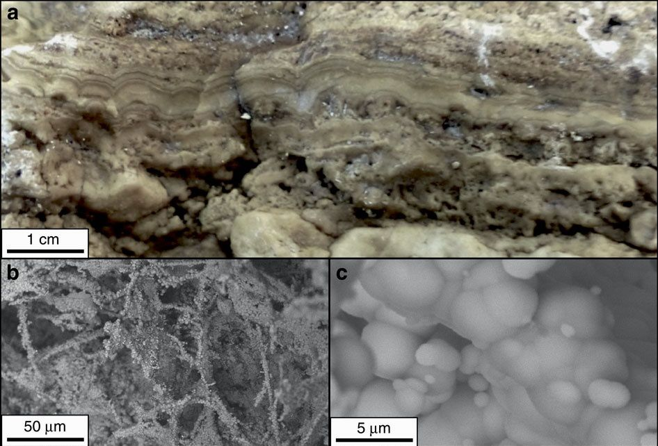 Champ d'événts Von Damm - a/ Paroi d'une cheminée effondrée montrant des bandes de talc – b/ c/ Images SEM du réseau dentritique et botryoïdal du talc. - Doc. Talc-dominated seafloor deposits reveal a new class of hydrothermal system - Matthew R. S. Hodgkinson, & al.