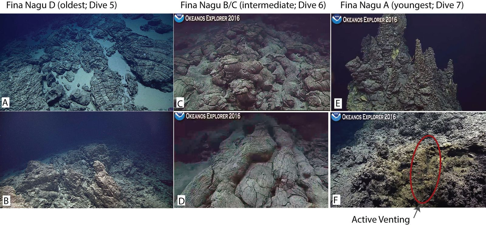 The seafloor photographed during dives 5-7: The north wall of the caldera D consists of pillow lava fractured and clear sediment (photo A) and dykes (photo B) - The dorsal between calderas B and C consists of pillow lava well preserved (picture C), some form tubes along the slopes (photo D) - the East resurgent dome of the caldera at present a large extinct hydrothermal vent (top photo E), and a light flux hydrothermal on the west (photo F) dome - Image courtesy of NOAA Office of Ocean Exploration and Research, 2016 Deepwater Exploration of the Marianas