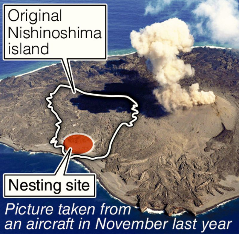The nesting site on Nishinoshima in November 2015 - Doc. Yomiuri Shimbun