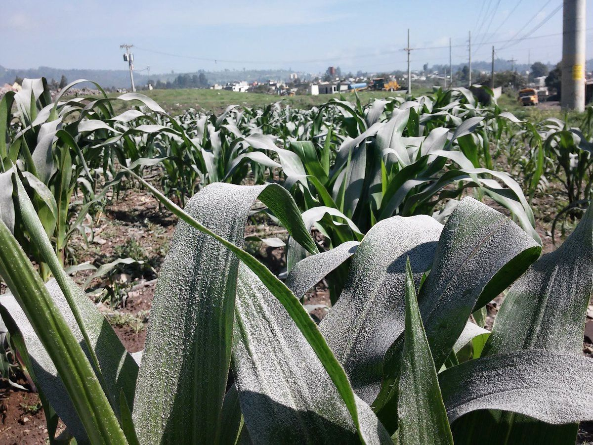 The ashes cover the cornfields near Quetzaltenango - Guatemala picture PrimeraLineaDX via Clima