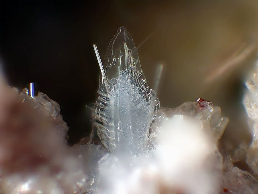 An aggregate of tridymite (height 1.1mm); on the right of the photo, the red crystal is a rutile - photo Fred Kruijen / CC BY-Wannenkopfe.strahlen.org Sac3.0 nl