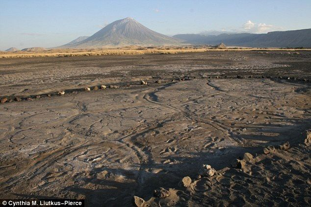 The collection of fossil footprints in the mud flat Engare Sero, with in the background, Lengai volcano - photo C.M. Liutkus-Pierce / Daily Mail