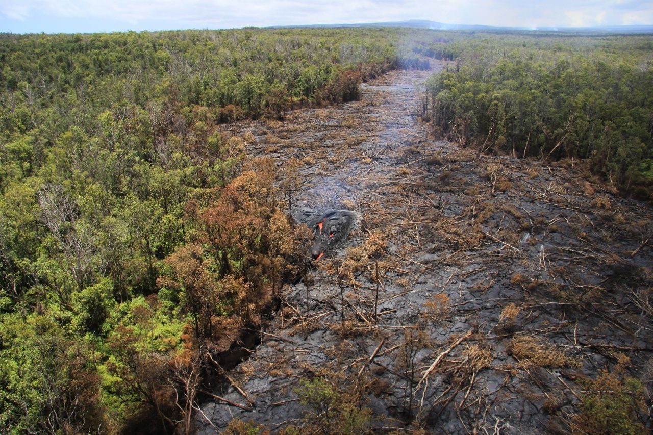 Forest area destroyed by lava flow, which plunges into a crack (in the center of the photo) - photo HVO 01.09.2014
