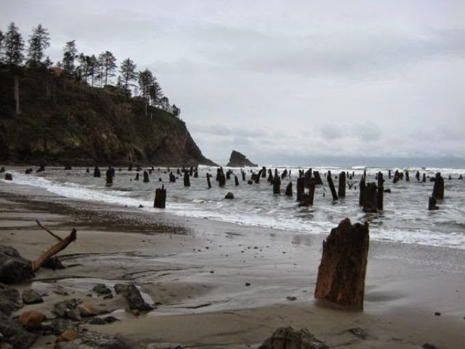 Neskowin Ghost Forest sur la côte nord de l'Oregon -photo robertchaen