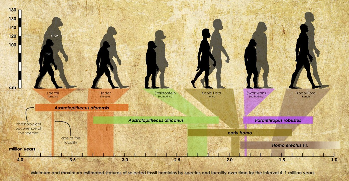 The largest and smallest hominid fossils by species between 1 and 4 Ma - one click to enlarge - doc. Marco-Cherin / Nature