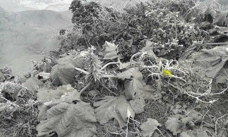 Poas - the ashes of the eruptions cover the vegetation - photos CNEmergencia and RSN the 25.04.2017