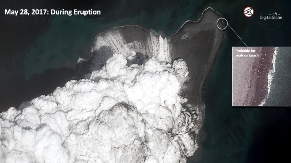 Bogoslof - during the eruption of May 28, 2017, with presence of fur seals - photo Courtesy of Digital Globe