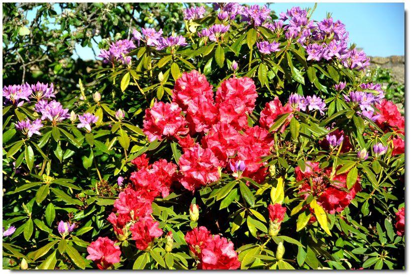 De la couleur dans les jardins