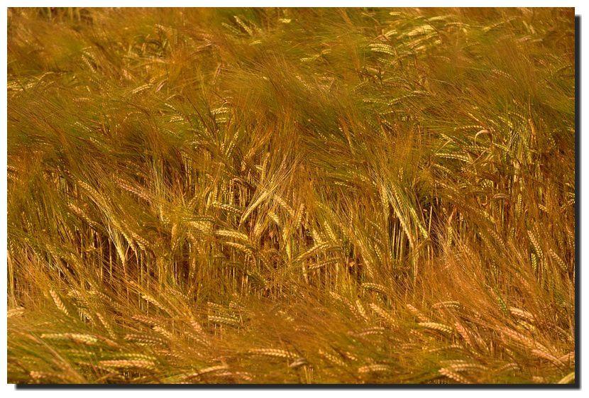 La couleur des champs