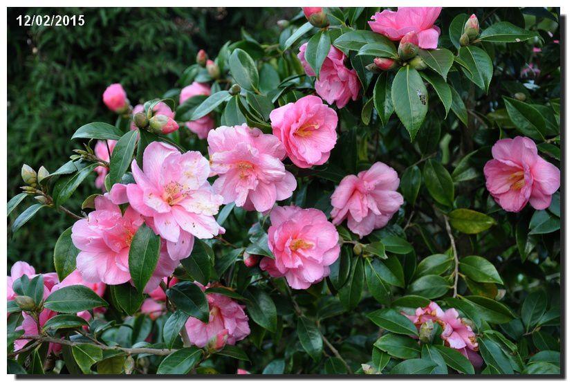 J'aime la couleur ...dites le avec des fleurs