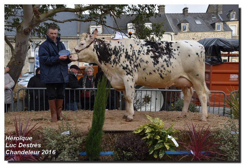 Montebourg, Chandeleur 2016 : les championnes normandes (1/4)