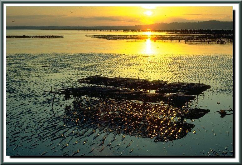 Les cultures marines dans le Val de Saire