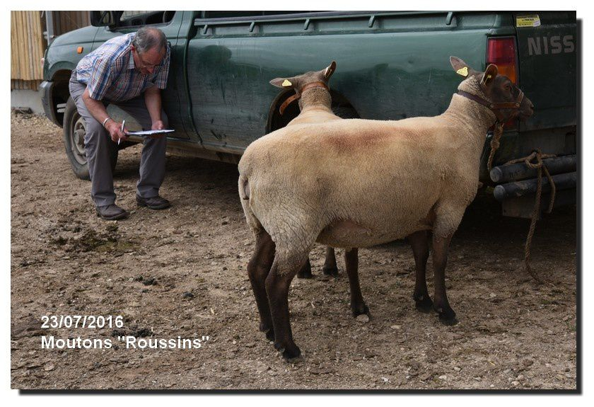 Préparation des références pour le jugement des ovins