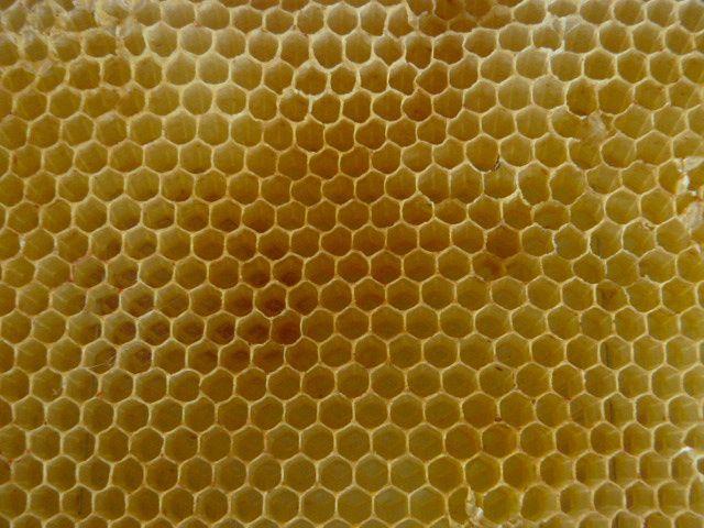 Le monde fascinant des abeilles #1