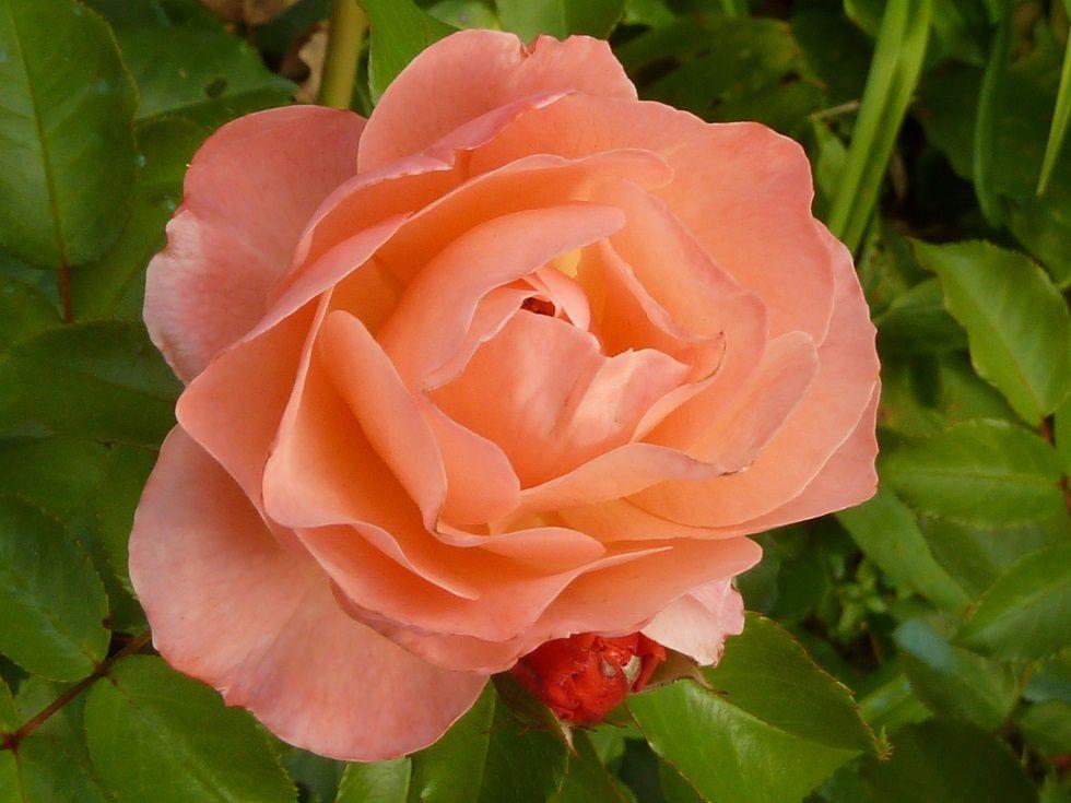 La fleur du lundi.