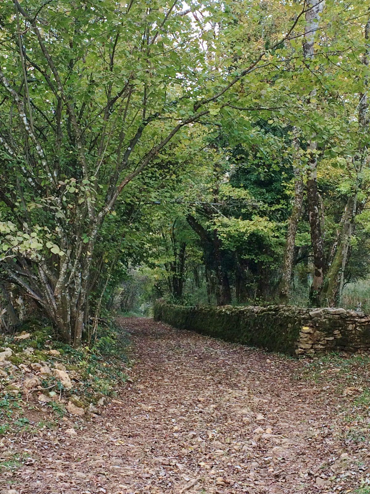 Sur un sentier de la colline du Rosemont