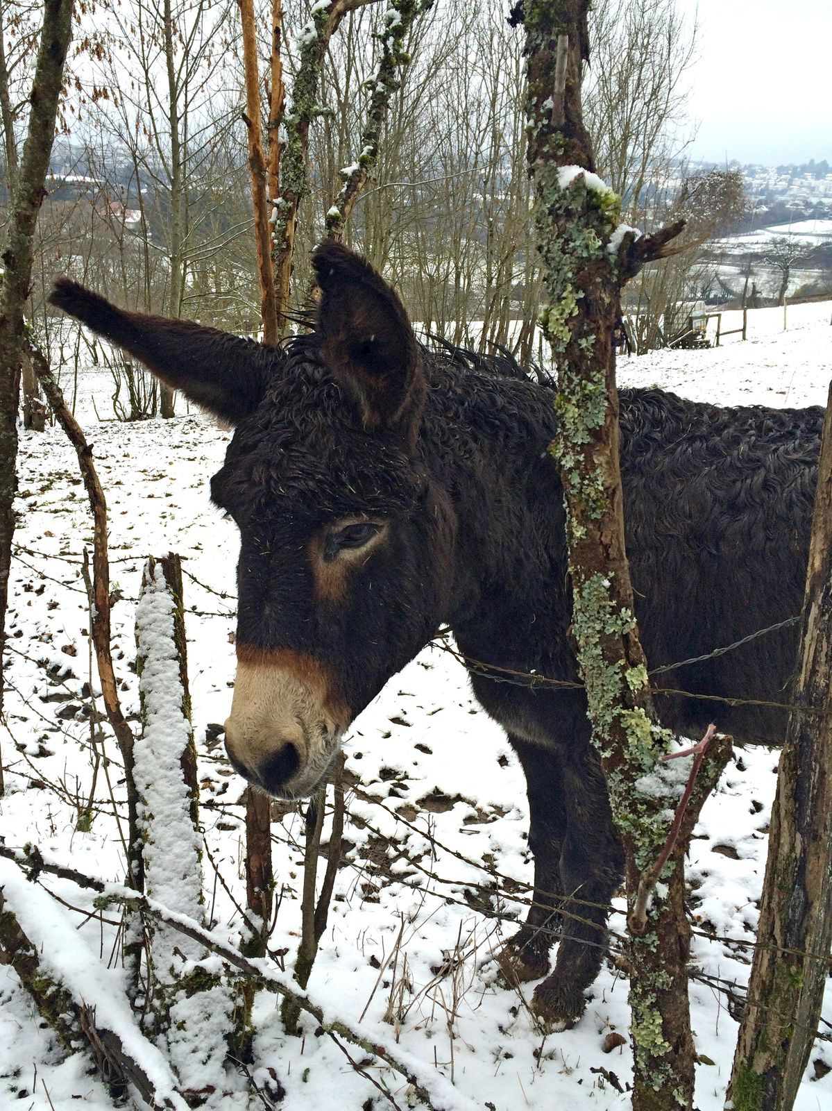 Les Vallières. Balade hivernale au Rosemont.