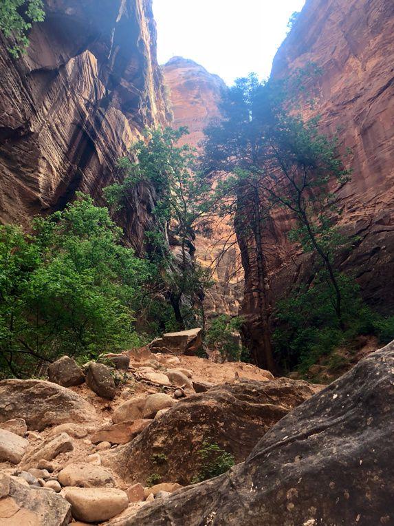 ZION Canyon. En remontant la rivière à pied...