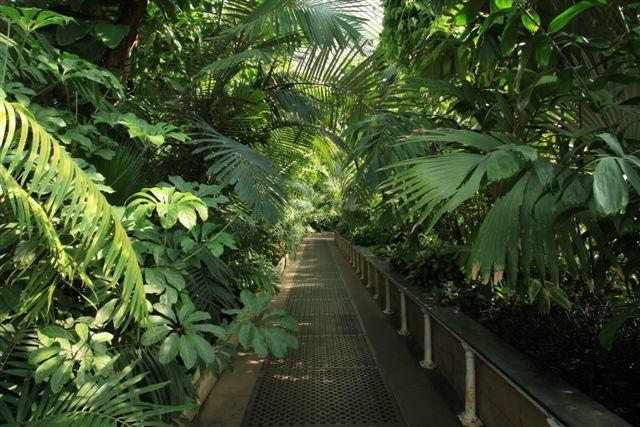 A l'intérieur de la serre Palm House