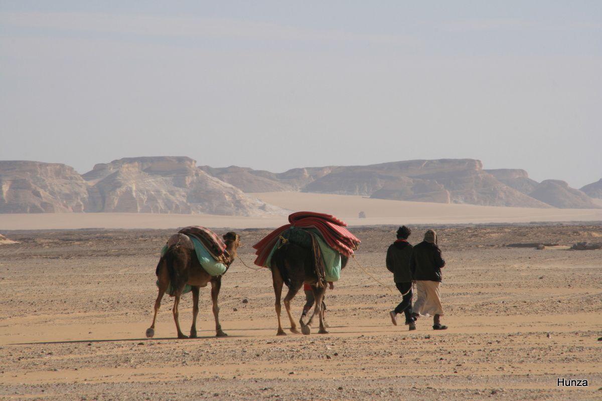 Trek dans le désert blanc en Egypte