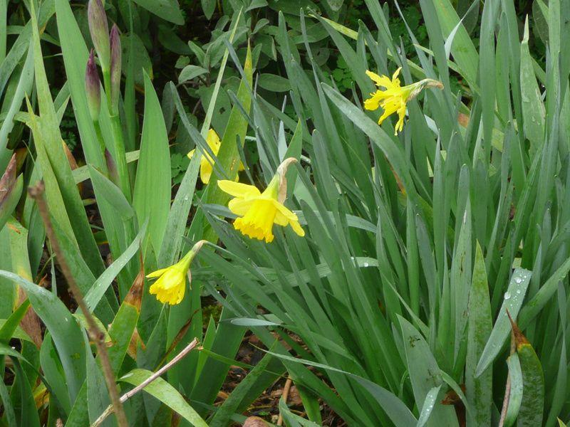 Les premières fleurs