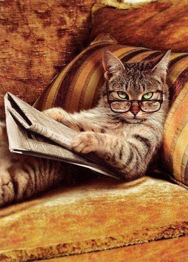 Le chat d'Hippolyte.