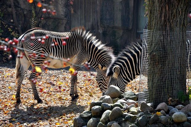 Doria aux Etats-Unis (13)...Chicago, Lincoln Park Zoo