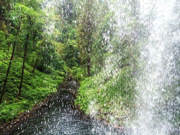 Alexie aux USA... (43) Silver Falls State Park dans l'Oregon
