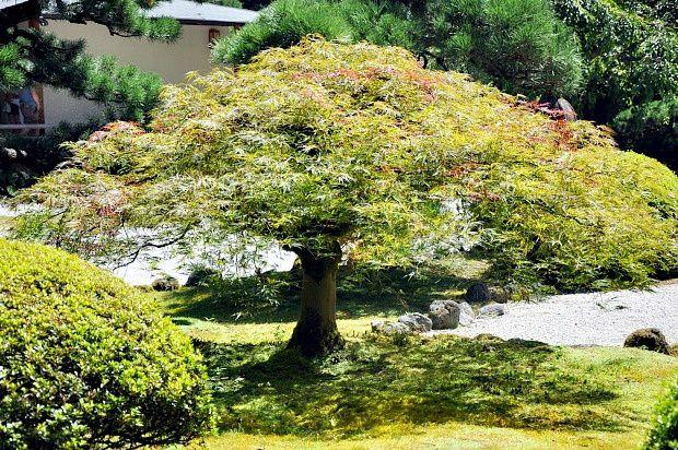 Doria aux Etats Unis dans l'Oregon (2016 - 4)... Japanese Garden Portland