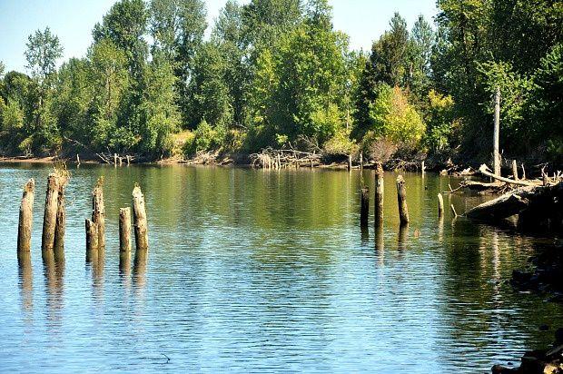 Doria aux Etats Unis dans l'Oregon (2016 - 6)... Sauvie Island