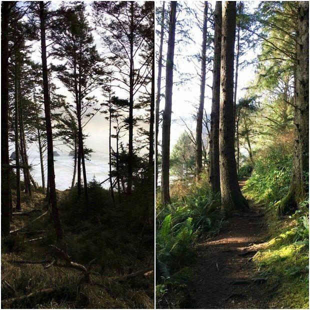 Doria aux Etas-Unis dans l'Oregon (2017 - 1)... Ecola State Park
