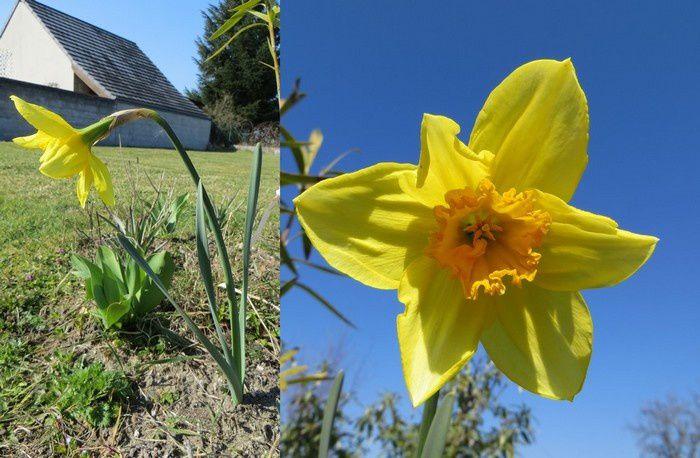 Premières fleurs du jardin