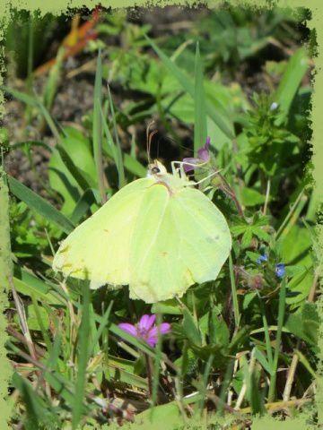 Jaune ou vert citron