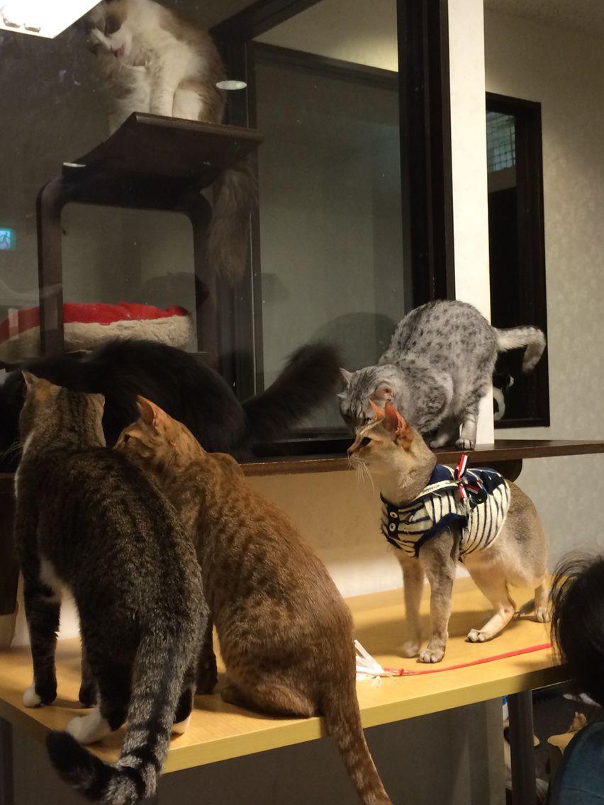 Bar à chat à Tokyo..