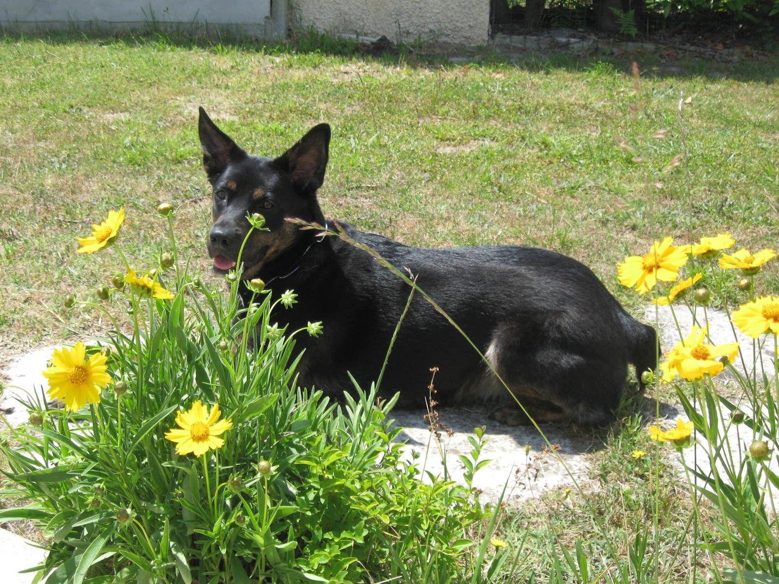 Aria au jardin