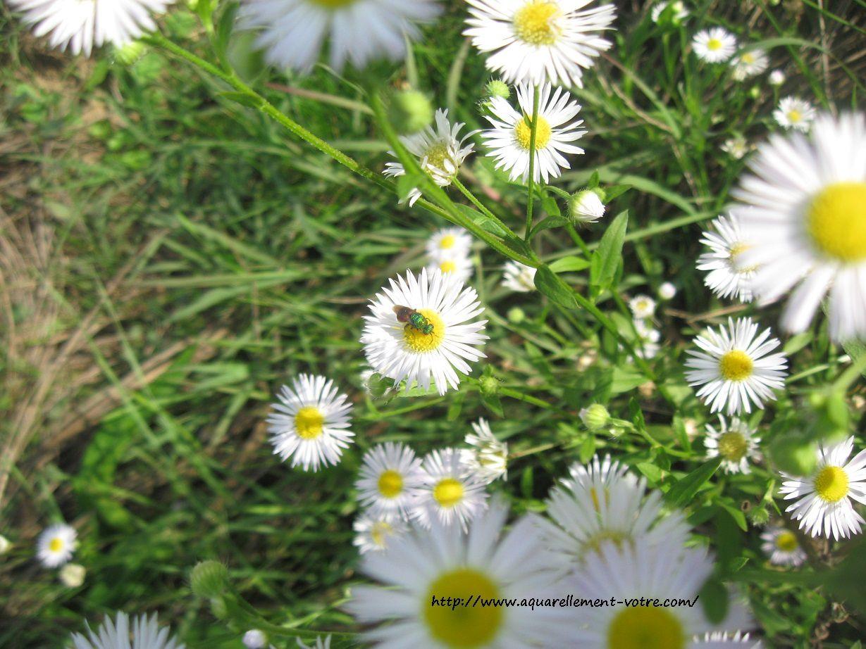 flowerpower celine