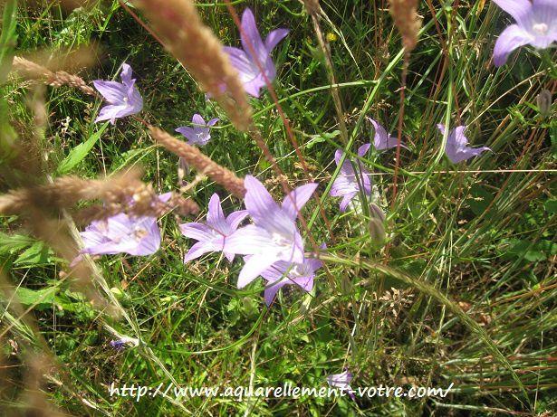 fleurs des balades