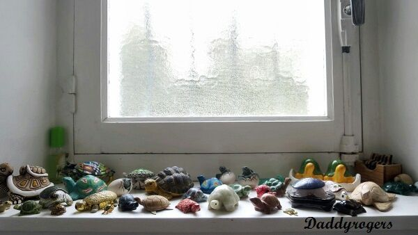 collection de tortues_Daddyrogers_photo