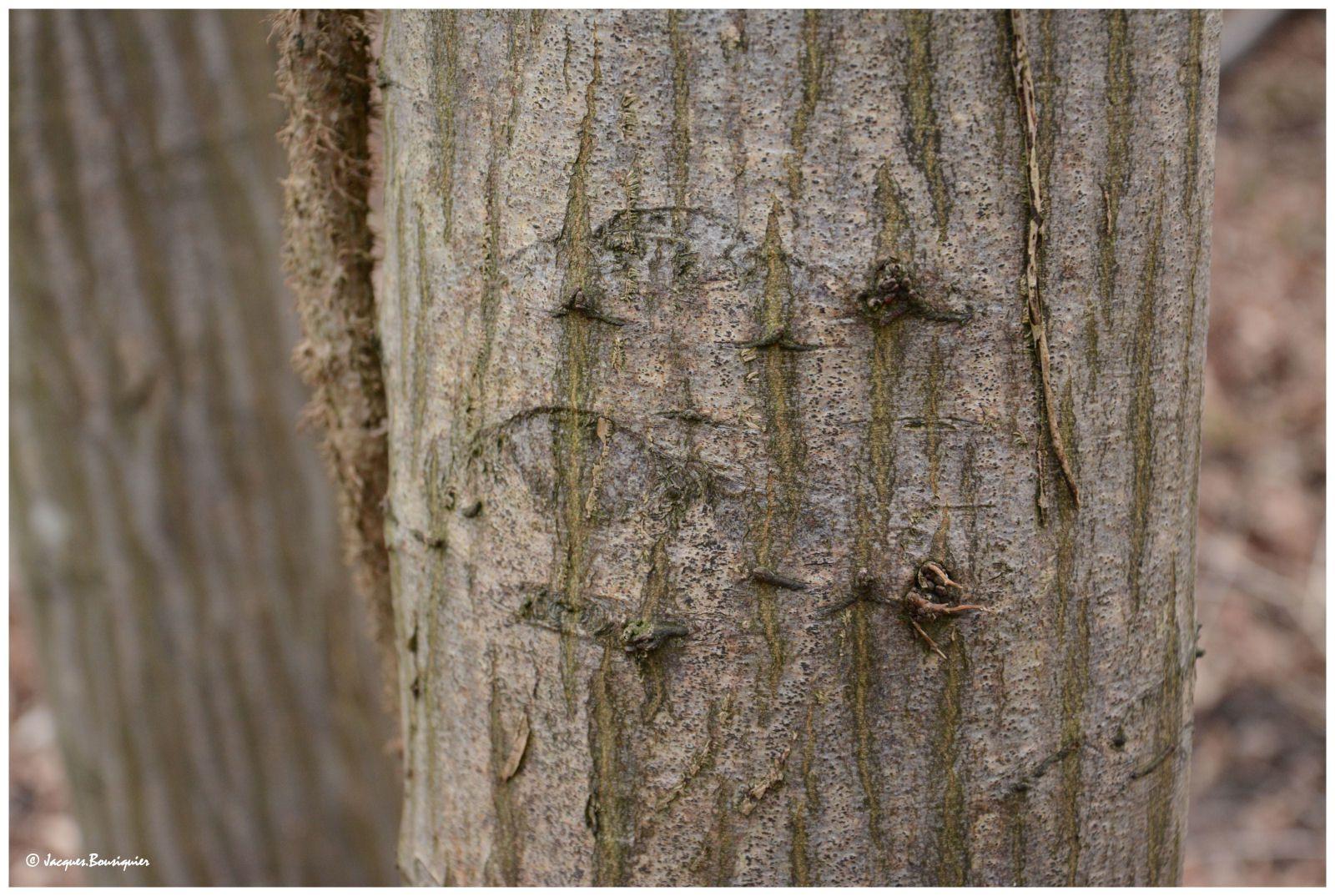 Balade en forêt de Chantilly