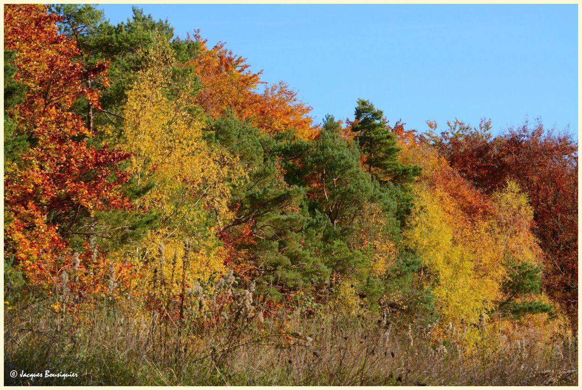 Chaudes sont les couleurs de l'automne