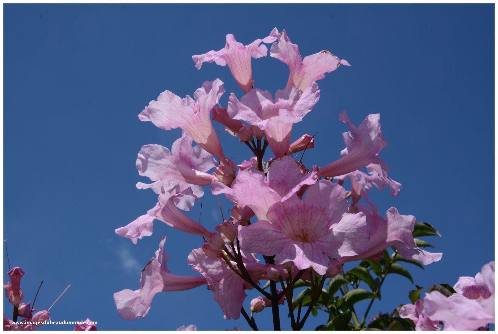 Des fleurs des îles... pour la Fête des Mères