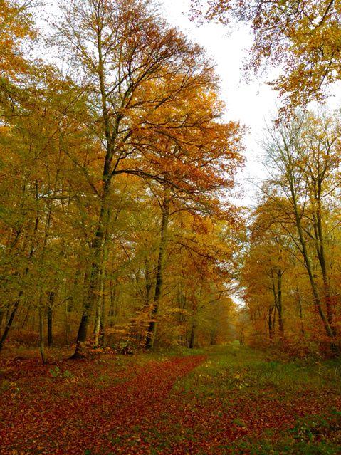 La forêt d'or