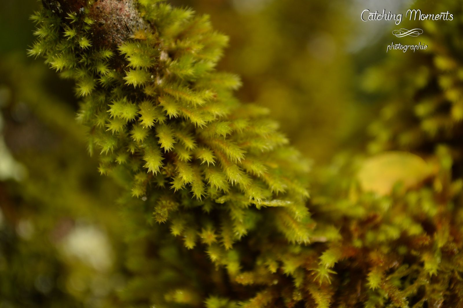Nature au naturel.