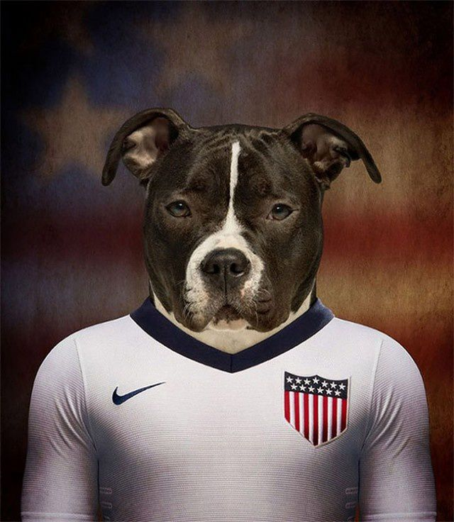Dogs of World Cup Brazil 2014