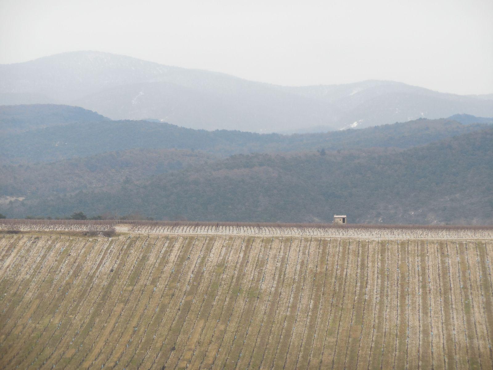 Vignes à Suze sur Crest; Un cabanon esseulé sur la crête.