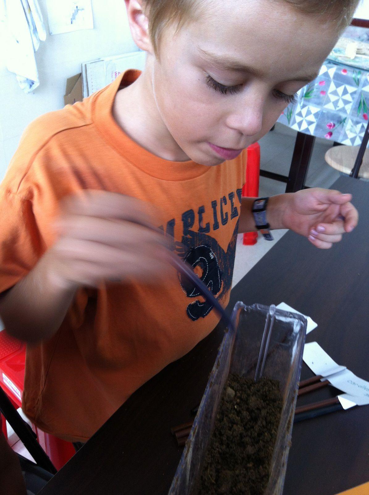 Robin est en train de faire des trous pour planter des graines dans le terrarium