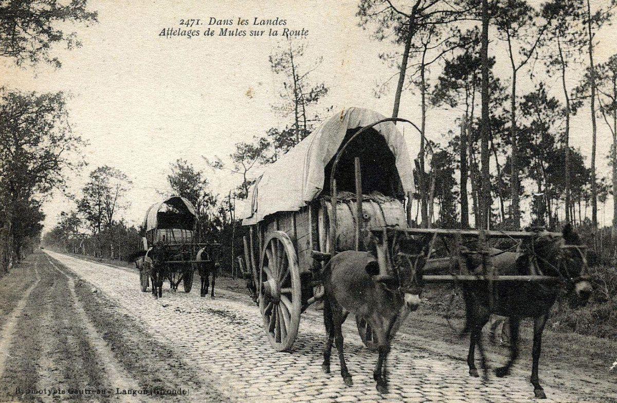 Transport des barriques de résine et arrivée à la distillerie.