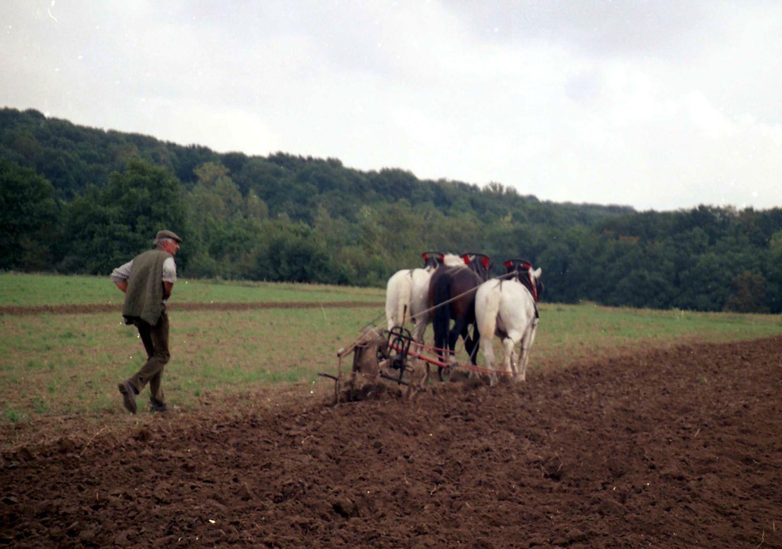 Sacy-le-Grand (Oise), 2002, Journées du Cheval de trait.
